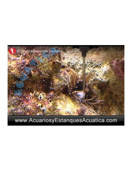 RED SEA AIPTASIA-X ACUARIOS MARINOS