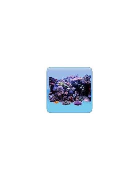 Roca Viva, corales y peces acuario marino